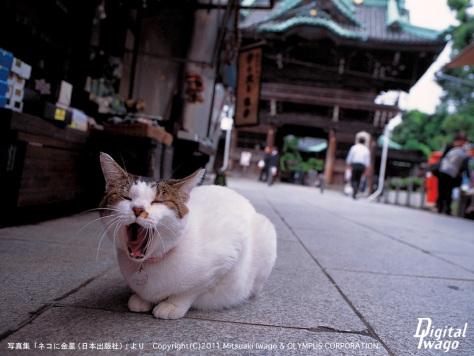 tokyo_M